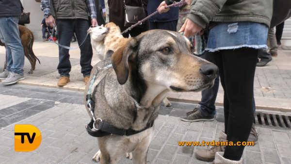 San Antoni animales 14