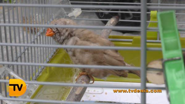 San Antoni animales 5